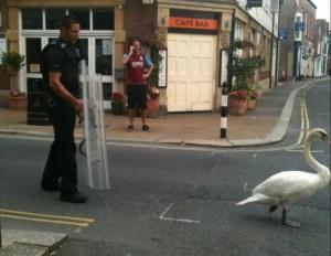 Riot Swan