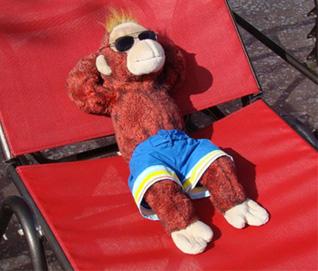 Monkey Sunbathing